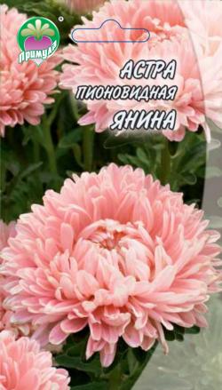 "Астра Пионовидная Янина ТМ ""Примула"""
