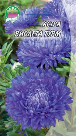 "Астра Виолета Турм ТМ ""Примула"""