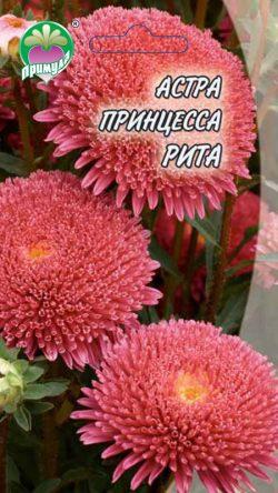 "Астра Принцесса Рита ТМ ""Примула"""