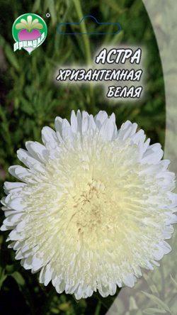 """Астра Хризантемная Белая ТМ """"Примула"""""""